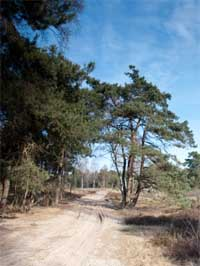Sallandse Heuvelrug